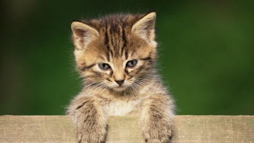 他不顾一切骂名,20年杀死1400多只猫,这是慈悲还是残忍?