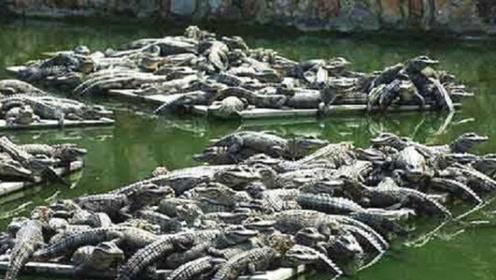 入侵中国最成功的生物,第2种被吃成渣,最后一种没有人敢惹!