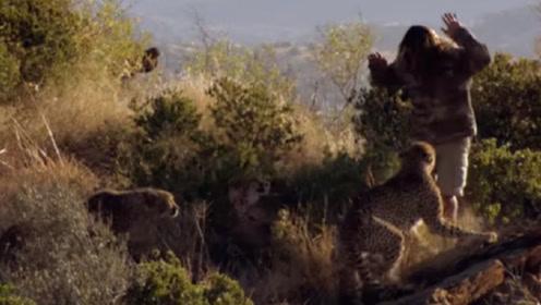 男子遭5头猎豹围攻,下一秒画面不敢看,镜头记录全过程