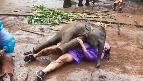 小象扑倒女游客要抱抱,饲养员也拦不住,可爱模样令人哭笑不得