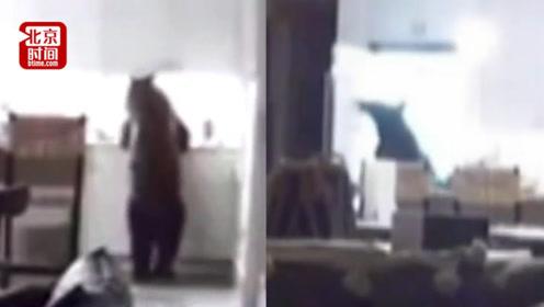 家里熊出没! 美250磅黑熊闯入民宅 熟练打开冰箱偷走冰淇淋