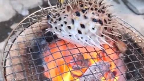 男子作死烤河豚,活着的河豚直接丢烤炉上,网友:救护车已就位?