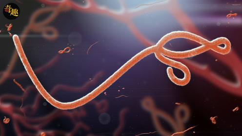 史上最强病毒之一的埃博拉,其实来源于这种动物,以后尽量少吃