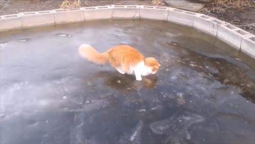 猫咪发现冰面有个洞,将爪子伸进去捞鱼吃,下一秒画风突变