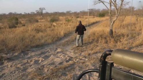 探险团队寻找狮群踪迹 未发现狮群就在眼前