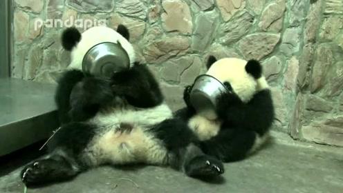 国宝母子喝盆盆奶,不愧是一对母子,姿势一摸一样