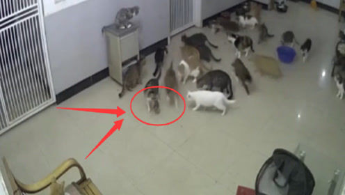 十几只猫咪正在聊天,不料一只老鼠闯进来,老鼠:倒八辈子霉了!