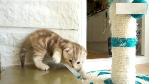 小猫学习用碗喝水,喝水的同时还不忘洗脸,萌态百出