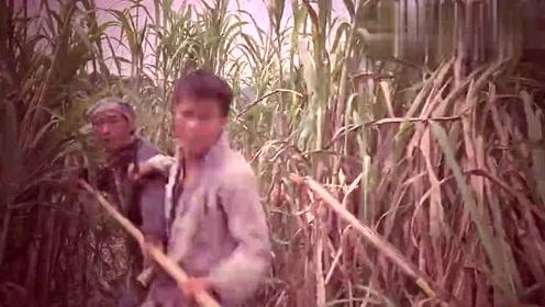 敌人进了甘蔗地,老鬼在后面帮忙搞偷袭