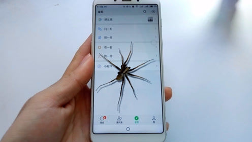 教你在微信里设置一个蜘蛛,有人看你微信,它就会悄悄爬出来
