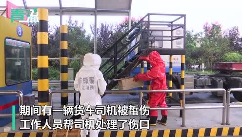 密恐!上万只蜜蜂盘踞浙江一高速收费站有司机被蜇 消防急处置