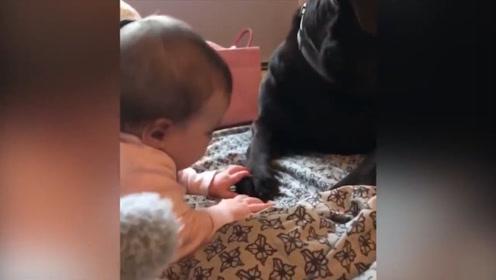看看狗狗们是怎么叫宝宝的,还能这样玩,真是想不到!