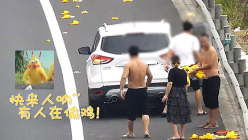 货车高速掉货被撞,玩具鸡散落高速!网友:求司机的心理阴影面积