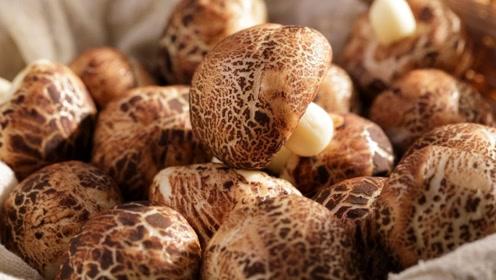 看着是蘑菇,吃着是馒头!绝了!