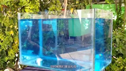 水中释放礼花,实验结果让人很意外