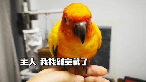 寻找食物历险记:鹦鹉太聪明了,今天终于找到了大秘宝啊