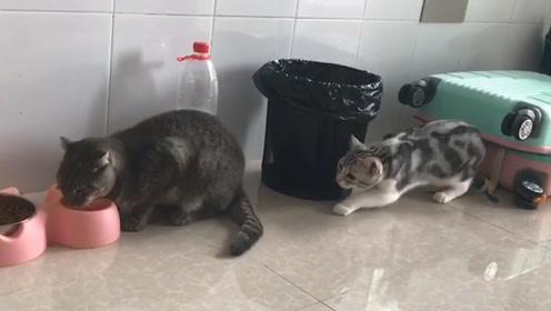 猫咪想偷袭同伴,一个眼神让它秒怂