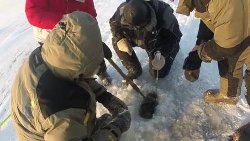 鱼太大,卡在冰洞口上不来,折腾半天才弄上来