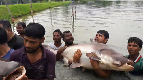 这惊人的一网,捕获两条罕见的鱼王,众人拍照合影