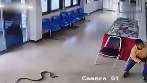 蛇悄悄潜入警察局,小伙神反应逃过一劫,厉害了!