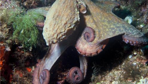 奇特海洋生物宛如外星物种不仅可以变色竟还可以上岸