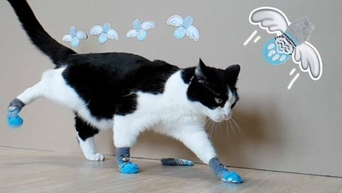 给猫咪穿上鞋子会发生什么?铲屎官终于硬气一回,看主子该怎么办