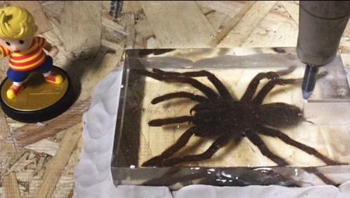 毒蜘蛛VS高压水刀,蜘蛛究竟能撑几秒?结局让人傻眼了!