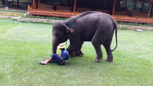 饲养员被攻击时,被照顾了17年的大象挺身而出,看完让人感动