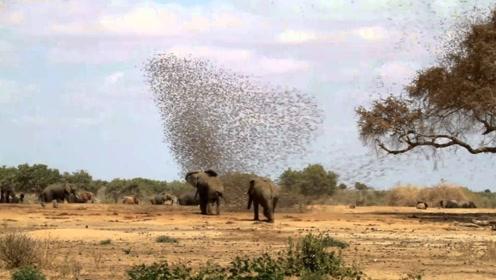 几十万只麻雀群殴大象,结果到底如何?大象有点尴尬啊!