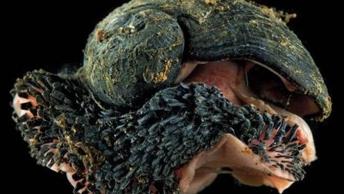 世界上最硬的蜗牛,用子弹都打不穿,美国用它造装甲车!