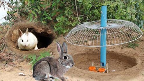 女孩用电风扇自制捕兔机,胡萝卜撒在地面,躺着收获肥兔子!