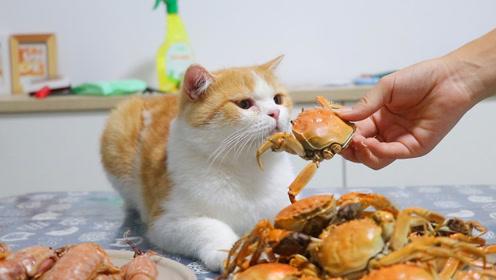 10几只猫追一只螃蟹,画风清奇搞笑