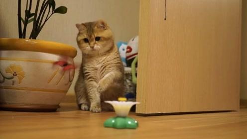 主人给小猫咪买了个猫咪玩具,猫咪:这玩具我可以玩一天