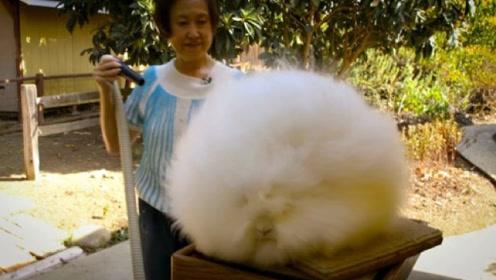 奶奶野外捡到一只兔子,收养了10年,孙女回家却被吓出一身冷汗