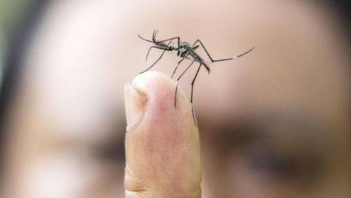 当蚊子在吸食血液时,为什么能打它?看完就知道原因了