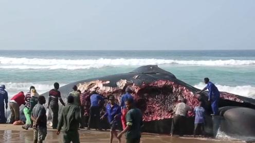 10吨重鲸鱼搁浅在海滩,非洲人一天将肉分光,镜头记录全过程!