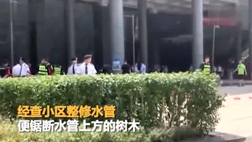 小区施工有隐患 广东86岁老人竟被树枝砸到不幸身亡