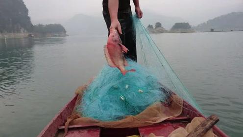 捕鱼那么多年,第一次见到红色的罗非鱼,真稀奇
