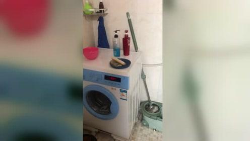 两瓶洗发水之间的爱情,洗衣机神助攻