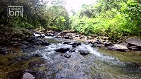 蓝旗鱼路亚   深入热带雨林,探钓神秘山河精灵蓝吉罗!