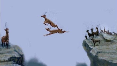 6只羚羊飞跃万丈悬崖,最后一只才是高手,镜头拍下全过程!