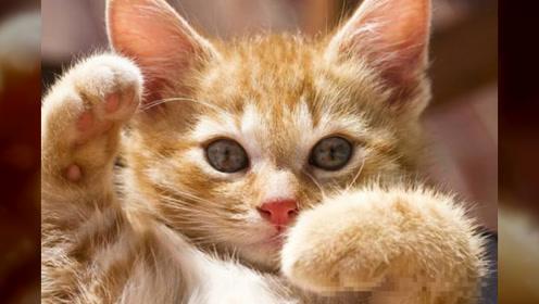 猫咪最讨厌的事你都知道吗?铲屎官要记清楚,不然猫咪会很反感你