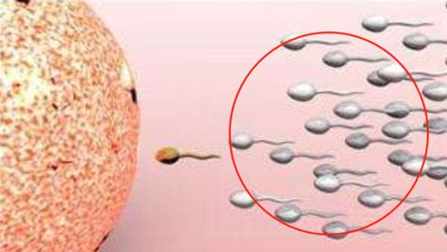 男人的亿万颗精子,仅有一两颗存活,其余的都去哪了?