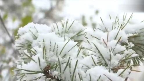 漠河下雪啦!首场降雪比去年早了25天,你是裹着貂还是露着腰?