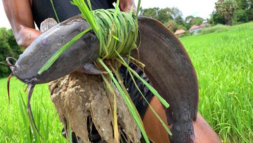 稻田里抓了一条大鱼,农村小伙会是什么吃法?