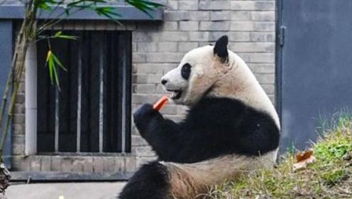 """全球头一只被退货的""""熊猫"""" 退回原因让人捧腹"""