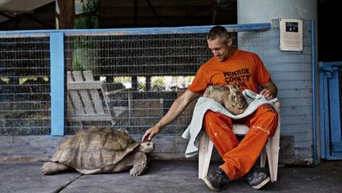 """世界上最""""暖心""""的监狱:让动物和犯人一起生活,感化效果更好!"""