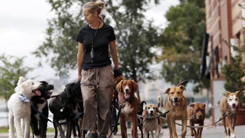 当遛狗变成职业,外国男子八年遛5万只狗,每月收入数千英镑!