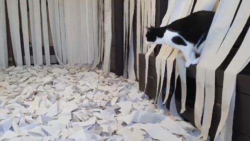 猫咪乱抓卫生纸,主人怒买100卷:让你玩到不想碰纸!