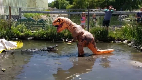 男子假扮恐龙挑衅鳄鱼,鳄鱼当场懵了,没想到是个怂包